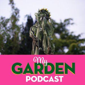 Gardening Podcast Sunflower