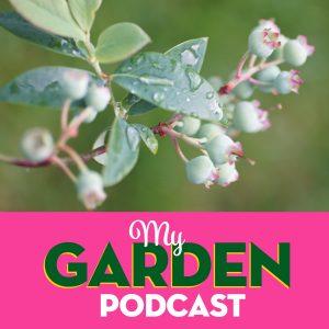 Garden Podcast blueberry