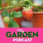 Gardening podcast strawberried