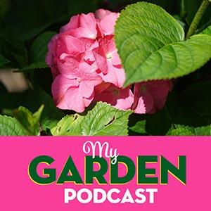 My Garden Podcast Hydrangea