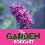 Gardening podcast ornamental grasses