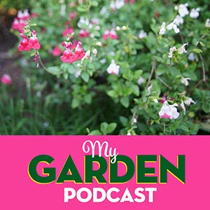 Gardening podcast salvia