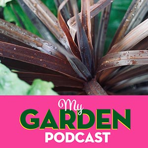 Gardening podcast cordyline