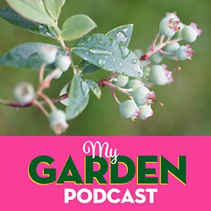 Gardening podcast blueberries