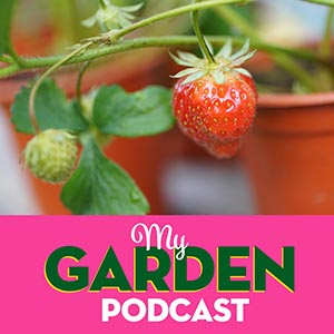 Gardening podcast strawberries