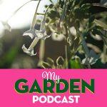 Gardening podcast nicotiana