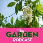 Gardening podcast wisteria