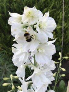 My Garden Podcast - Season two